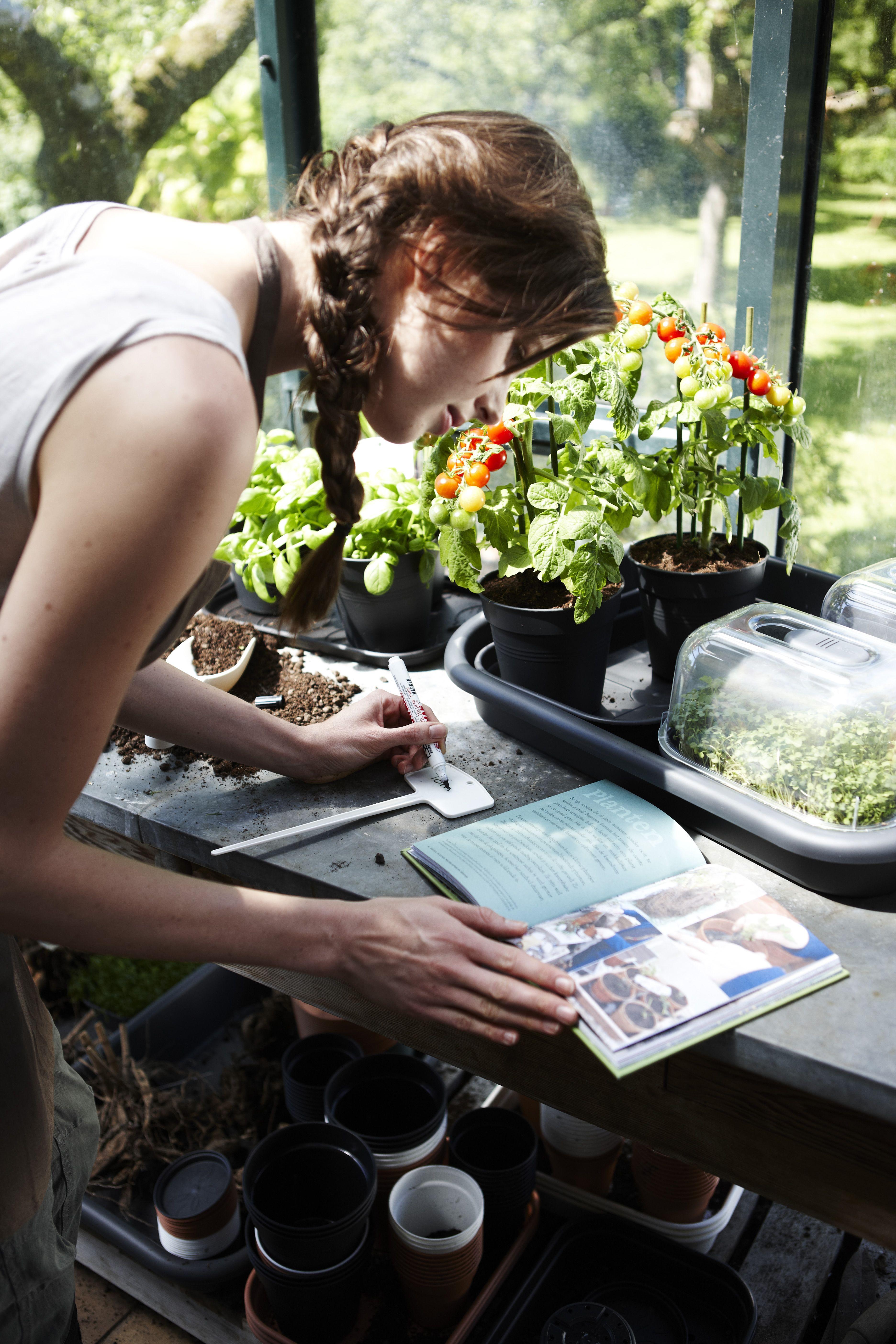 Cultiva tu propia comida: Productos y servicios de El Abeto