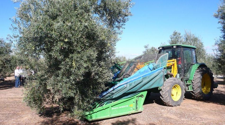 Análisis de cultivos y estudio de fertilizantes en Jaén