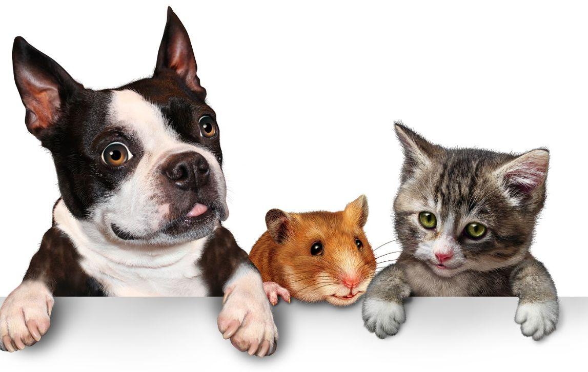 Mascotas: Catálogo de Adeslas