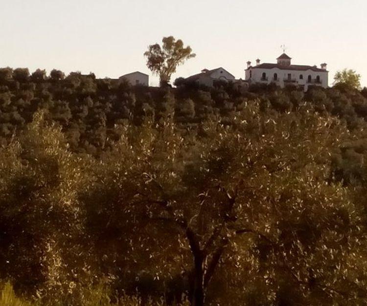 Venta de casas de campo en Ciudad Real