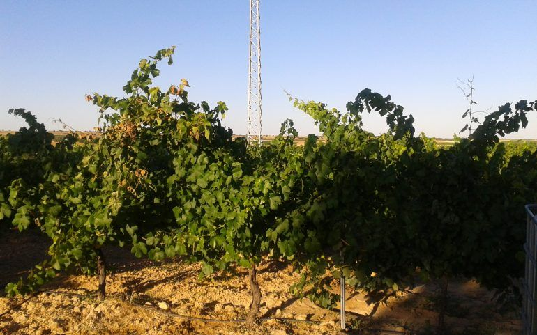 Venta de viña en espaldera de regadio: Inmuebles Urbanos de ANTONIO ARAGONÉS DÍAZ PAVÓN