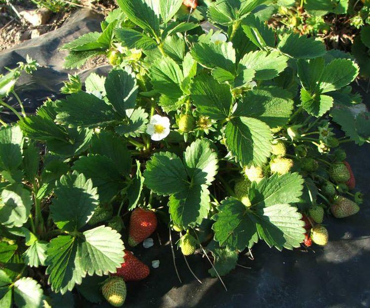 Venta de frutas ecológicas en A Coruña