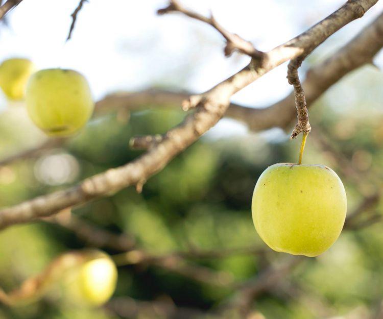 Frutas ecológicas en A Coruña