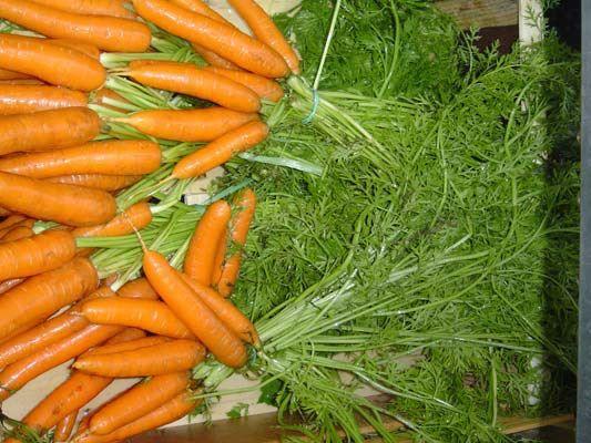 Hortalizas: Productos de Horta+Sá