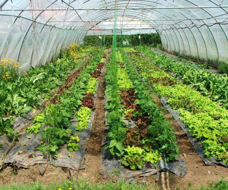 Producción de frutas y verduras ecológicas en A Coruña