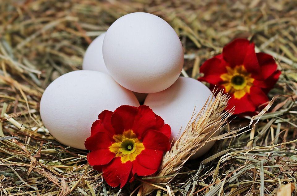 Huevos: Productos of Horta+Sá