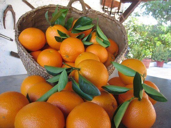 Frutas: Productos de Horta+Sá