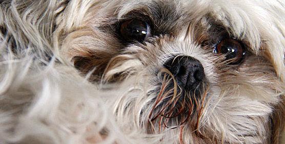 Peluquería canina: ¿Qué hacemos? de Centro Veterinario Chozas de la Sierra