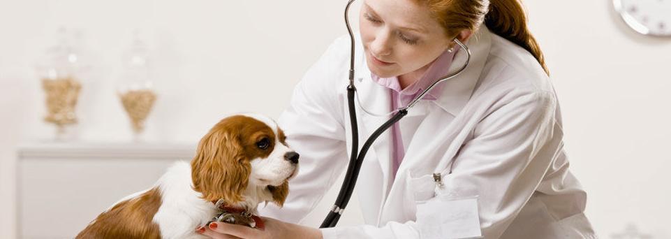 Foto 2 de Clínica veterinaria en Soto del Real | Centro Veterinario Chozas de la Sierra