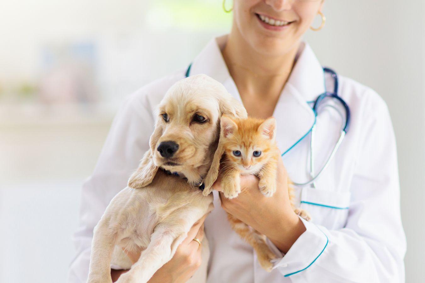 Clínica veterinaria en Madrid centro