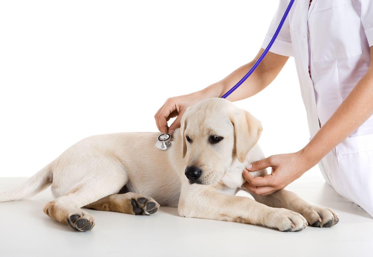 Urgencias veterinarias en Pozuelo