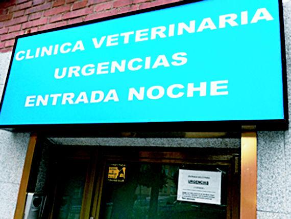 Foto 1 de Alimentos para animales en Madrid | Centro Veterinario Ciudad de los Ángeles