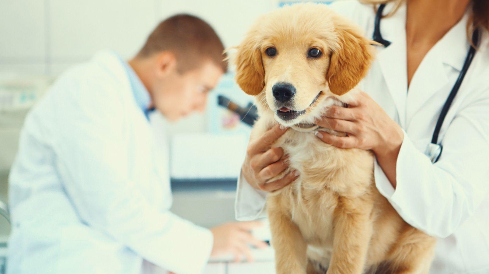 Urgencias veterinarias en Boadilla del Monte