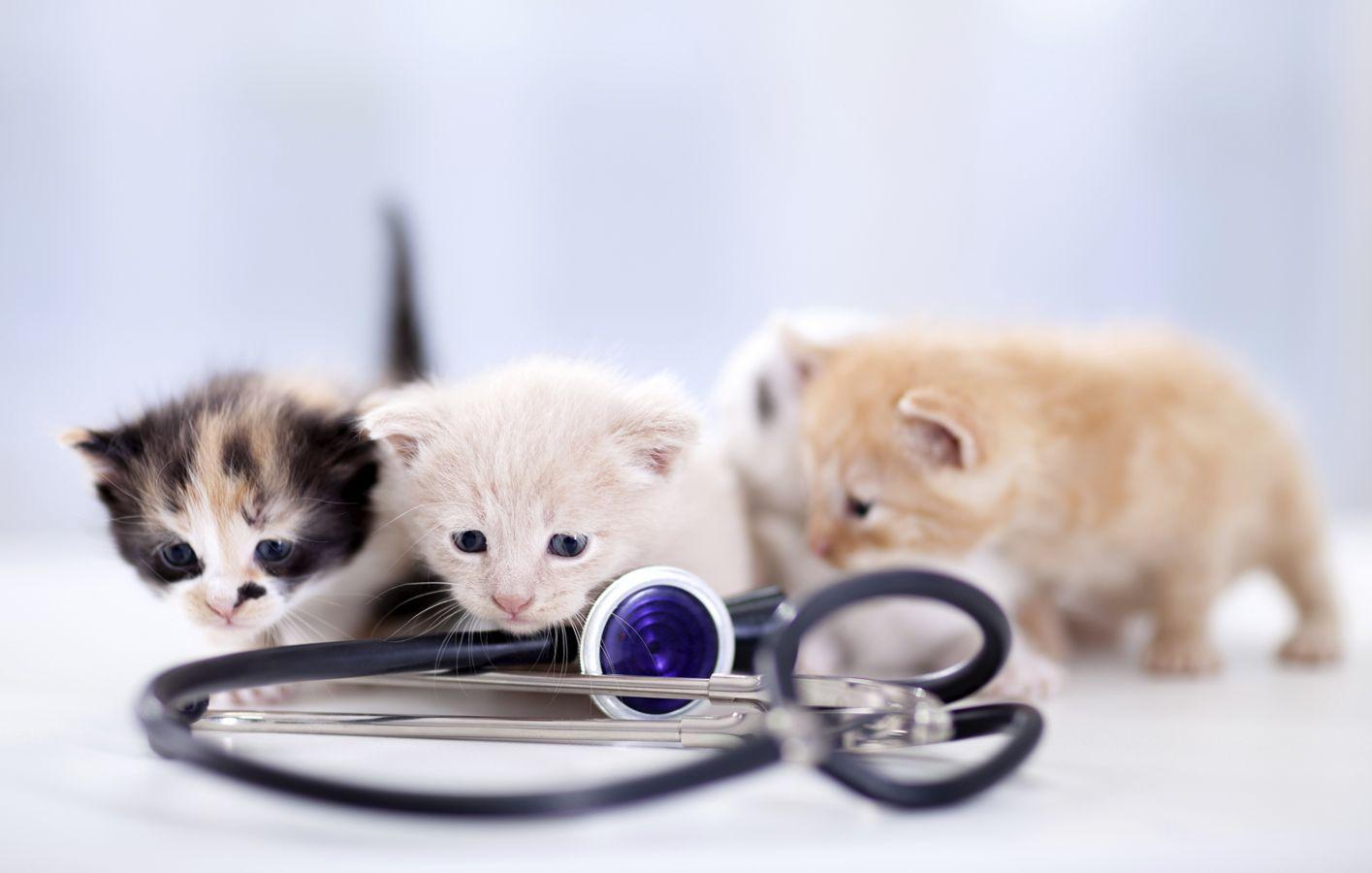 Clínica veterinaria en Villaverde, Madrid