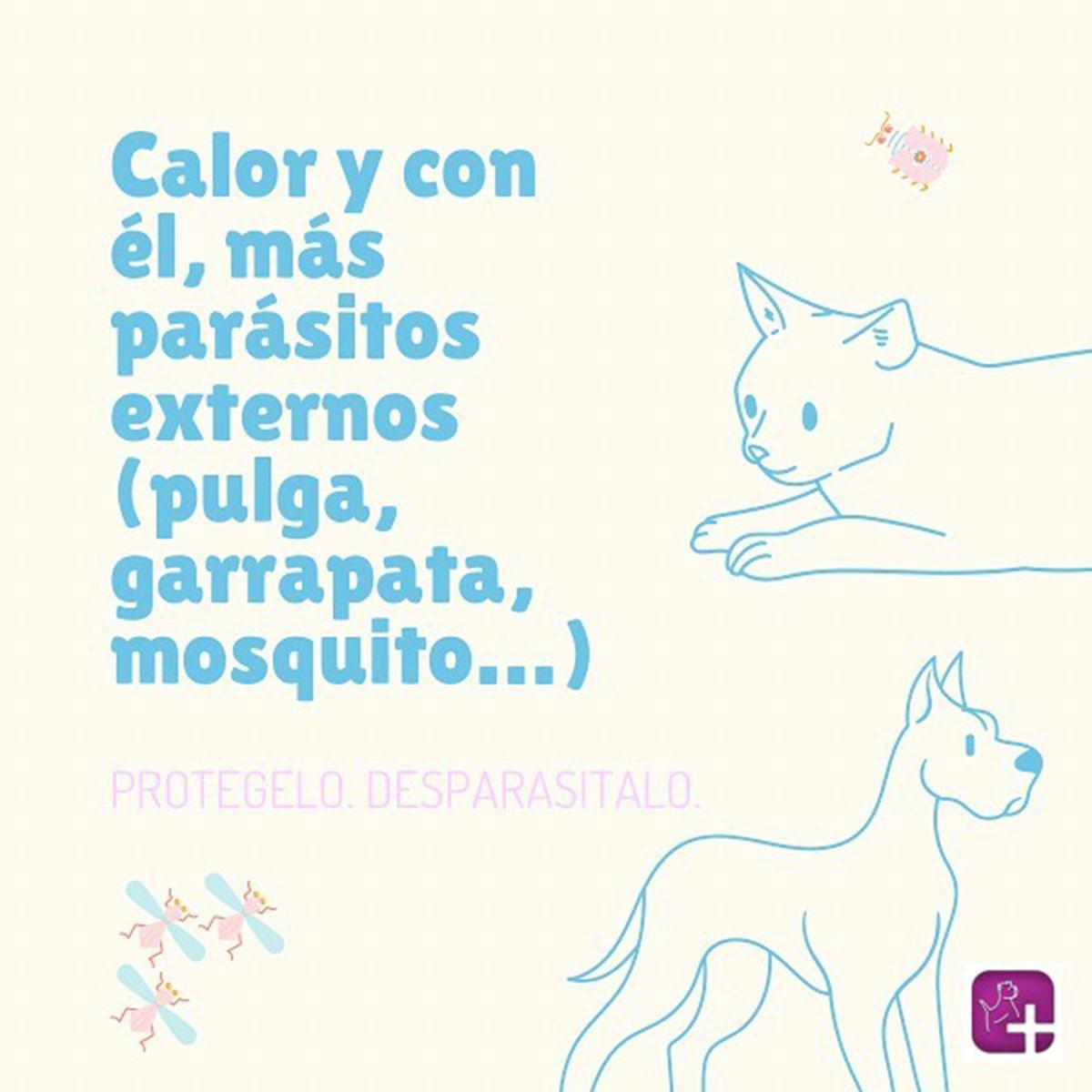 Especialistas veterinarios en Valencia