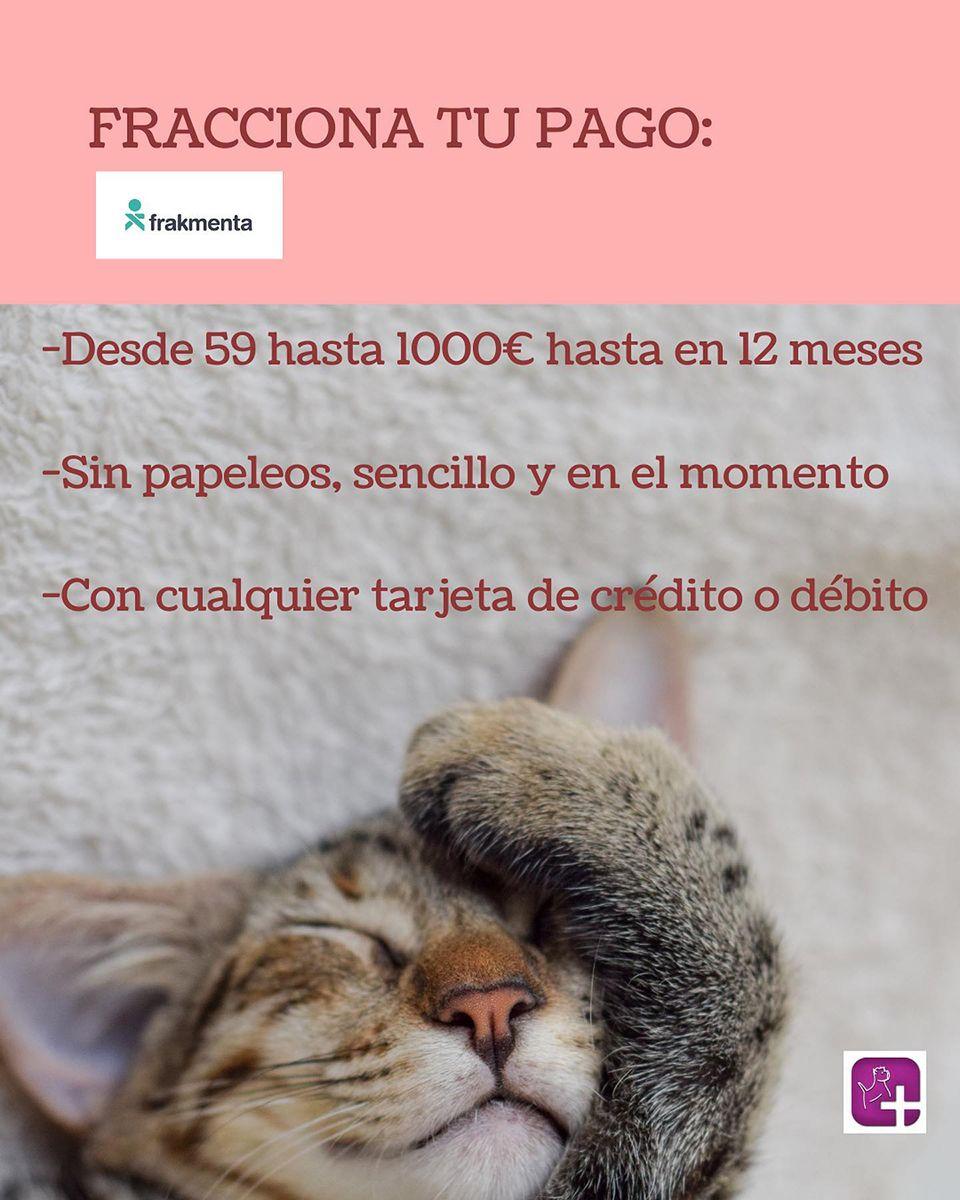 Consulta veterinaria en Valencia