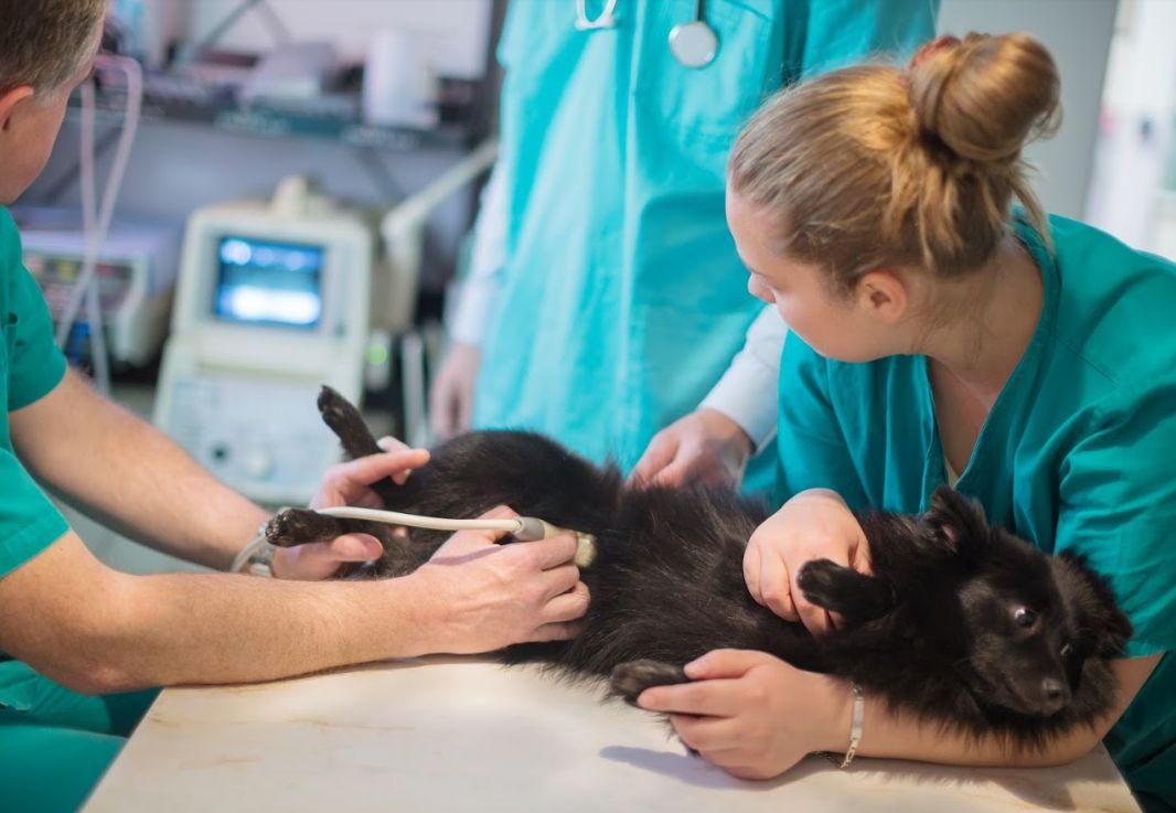 Diagnóstico por imagen: Servicios de Centro Veterinario Juan XXIII