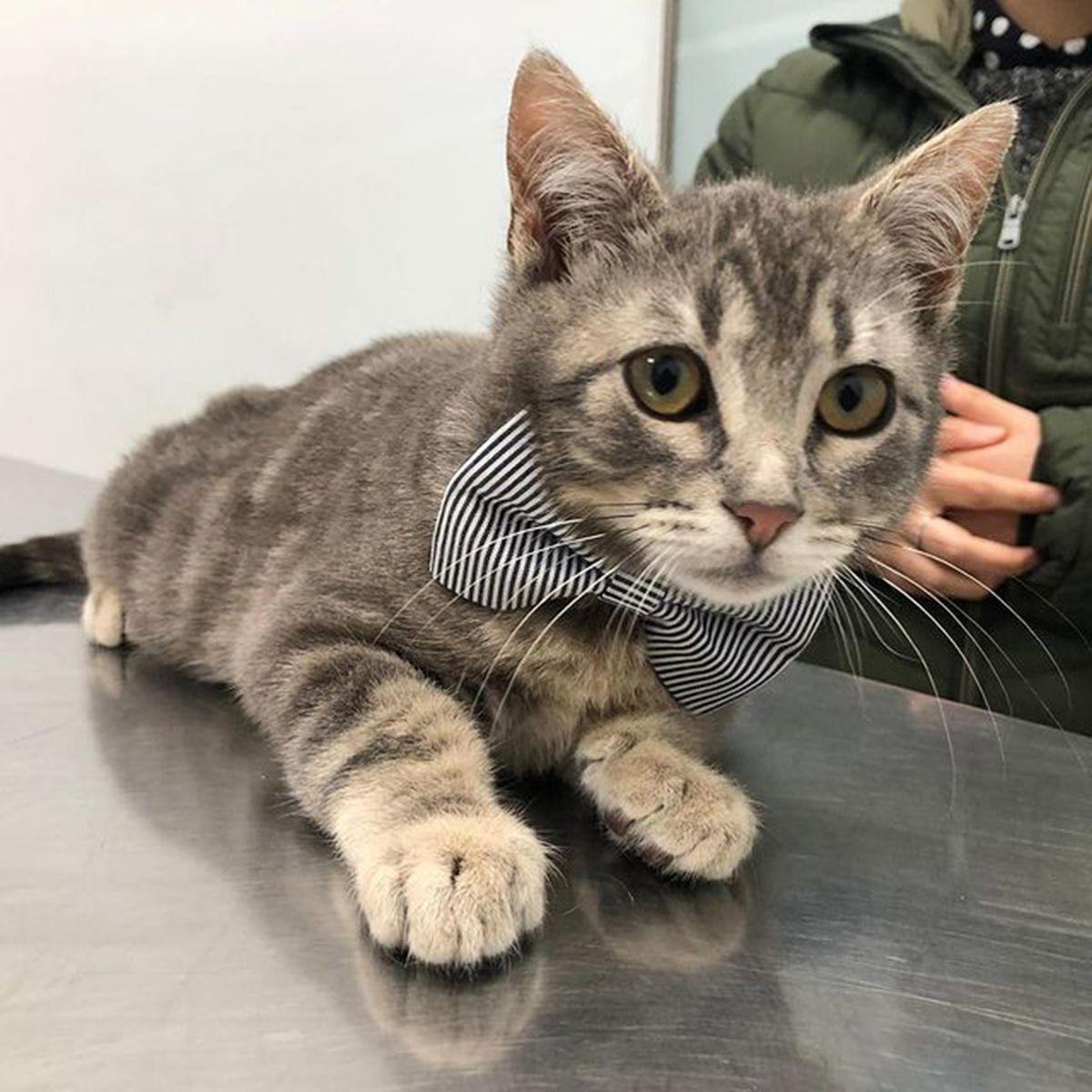 Veterinarios de gatos en Valencia