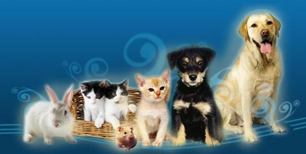 Consultas veterinarias en Talavera de la Reina