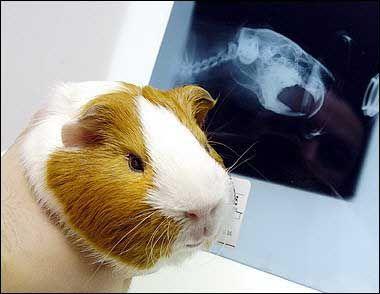 Clínica veterinaria con radiografías en Talavera de la Reina