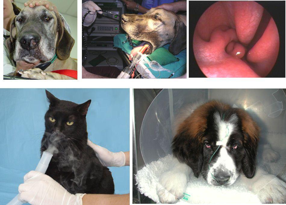 Clínica veterinaria en Talavera de la Reina