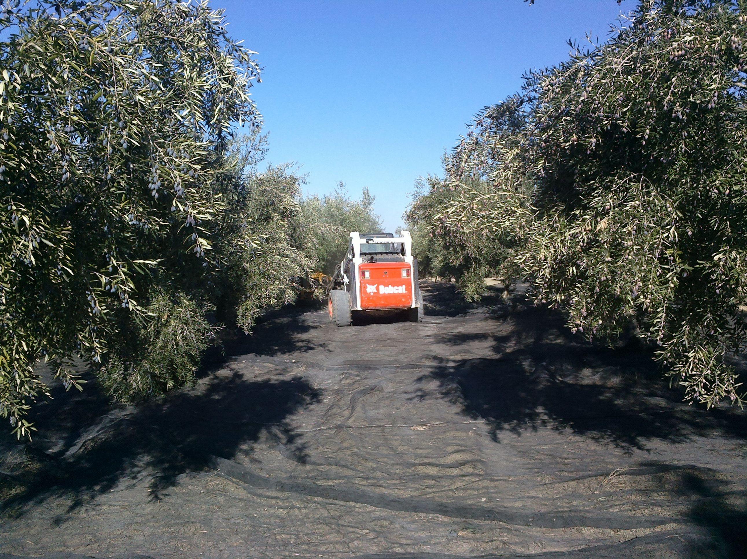 Aceite de oliva extraordinario