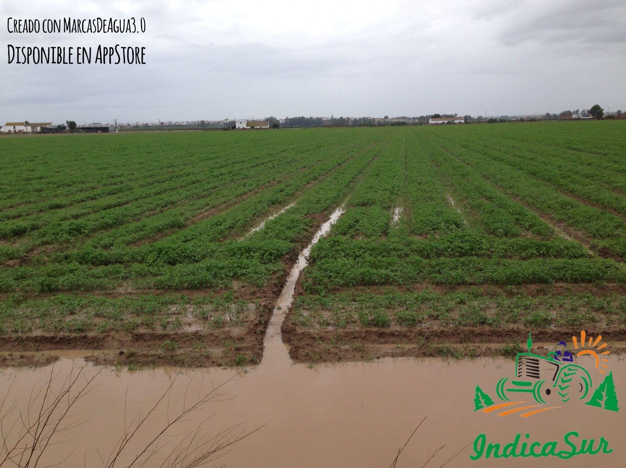 EN EL DIA 21 DEJO DE SER CULTIVO AGRICOLA PARA CATALOGARSE EN HIDROPONICO