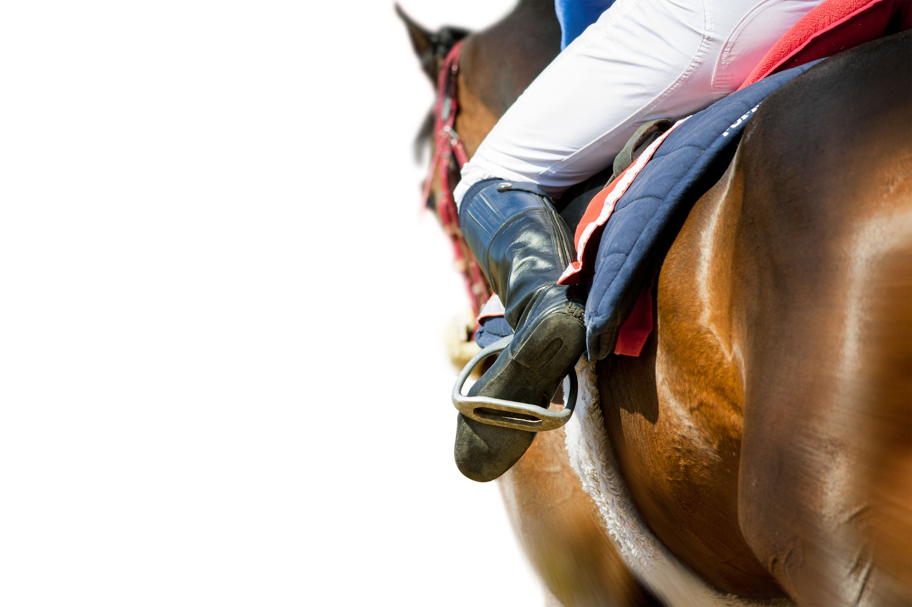 Equestrian and Horse Riding courses with the best experts