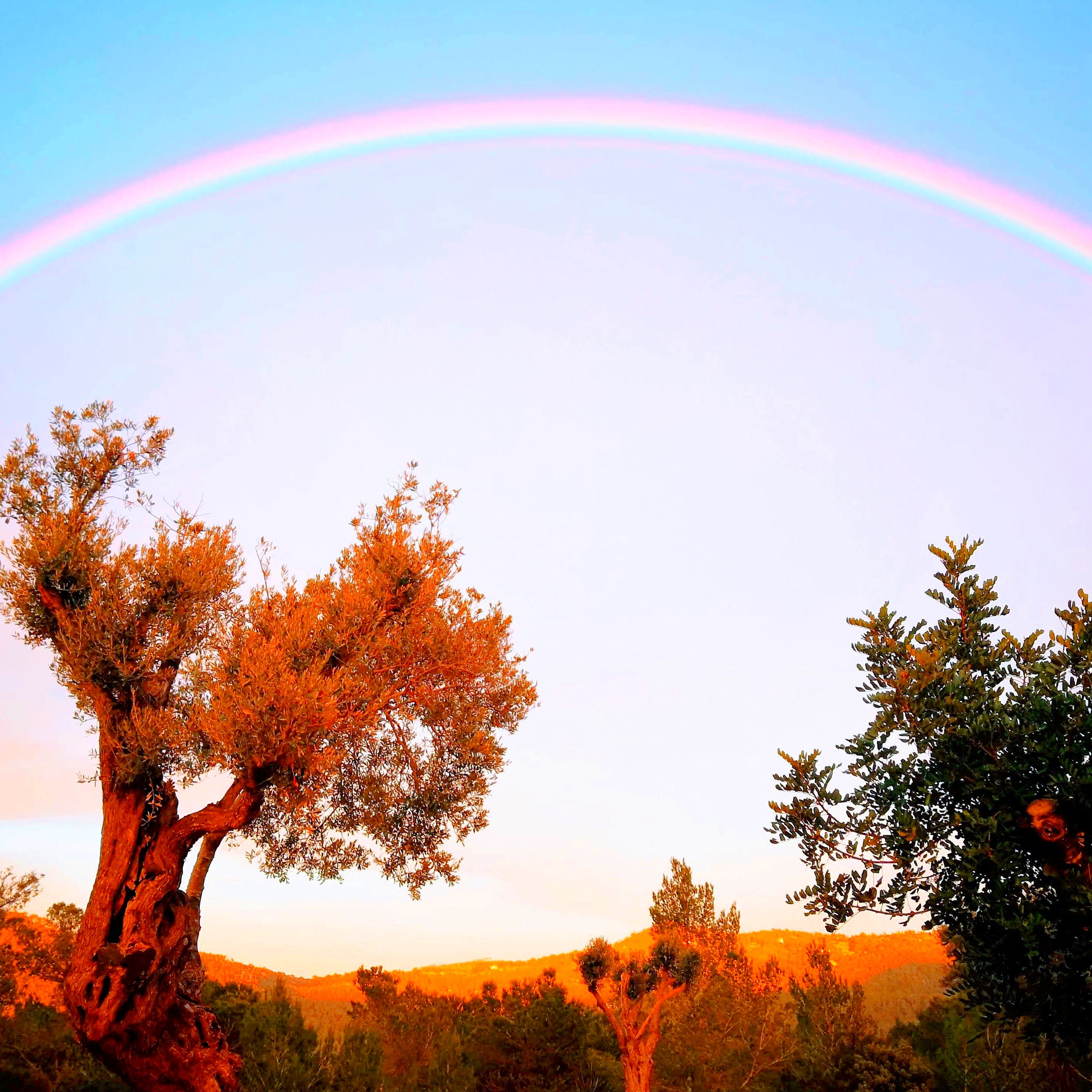 Foto 7 de Abogados en Eivissa | Raad Abogados. Tel 691 270 993