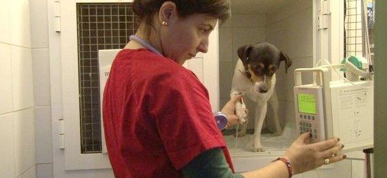 Consulta general: Servicios y Productos de Clinica Veterinaria La Huella
