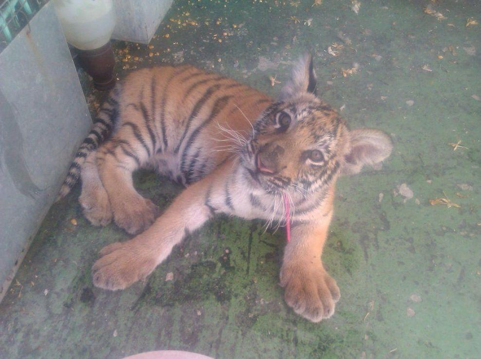 Animales exóticos: Servicios y Productos de Clinica Veterinaria La Huella