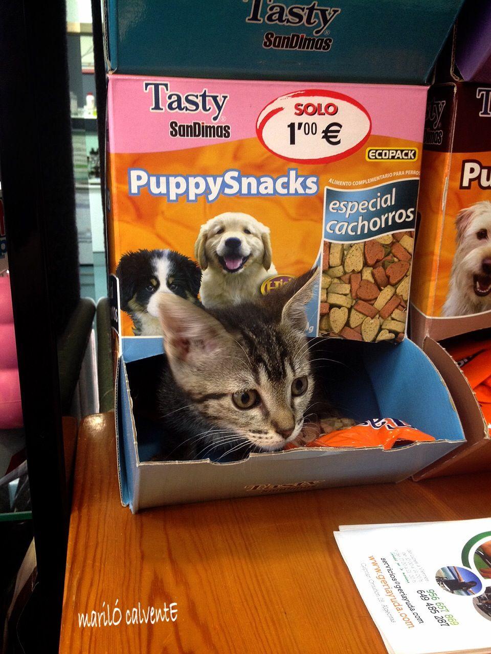Alimentación para mascotas en Algeciras