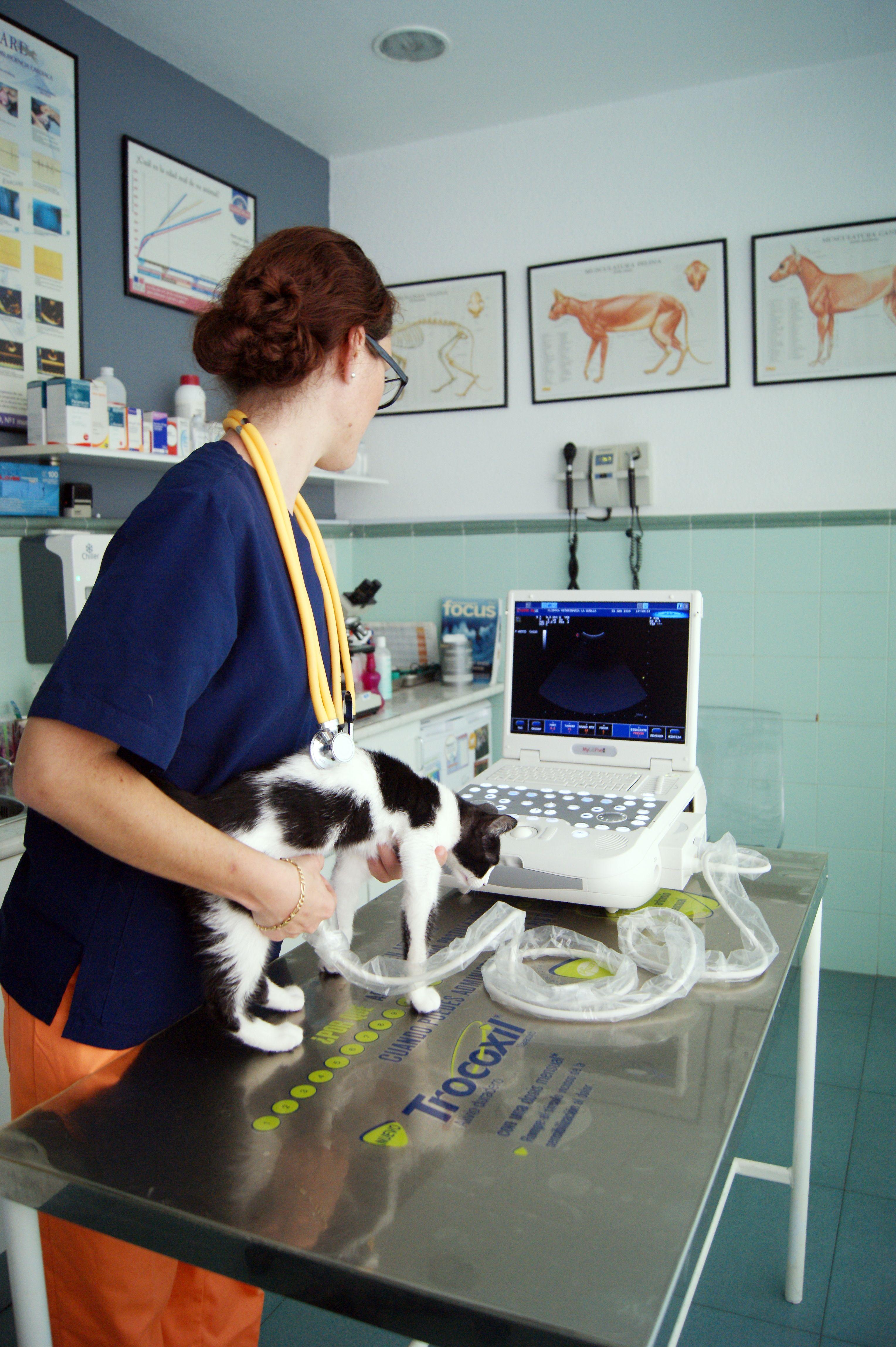 Urgencias veterinarias 24 horas en Algeciras