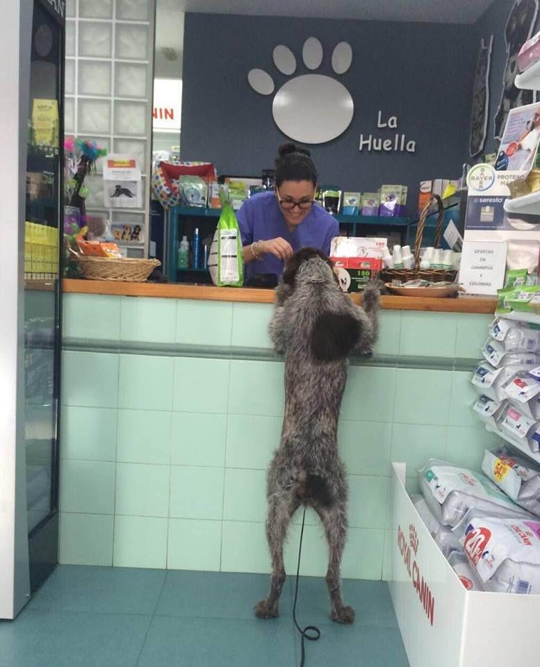Piensos para perros y gatos en Algeciras