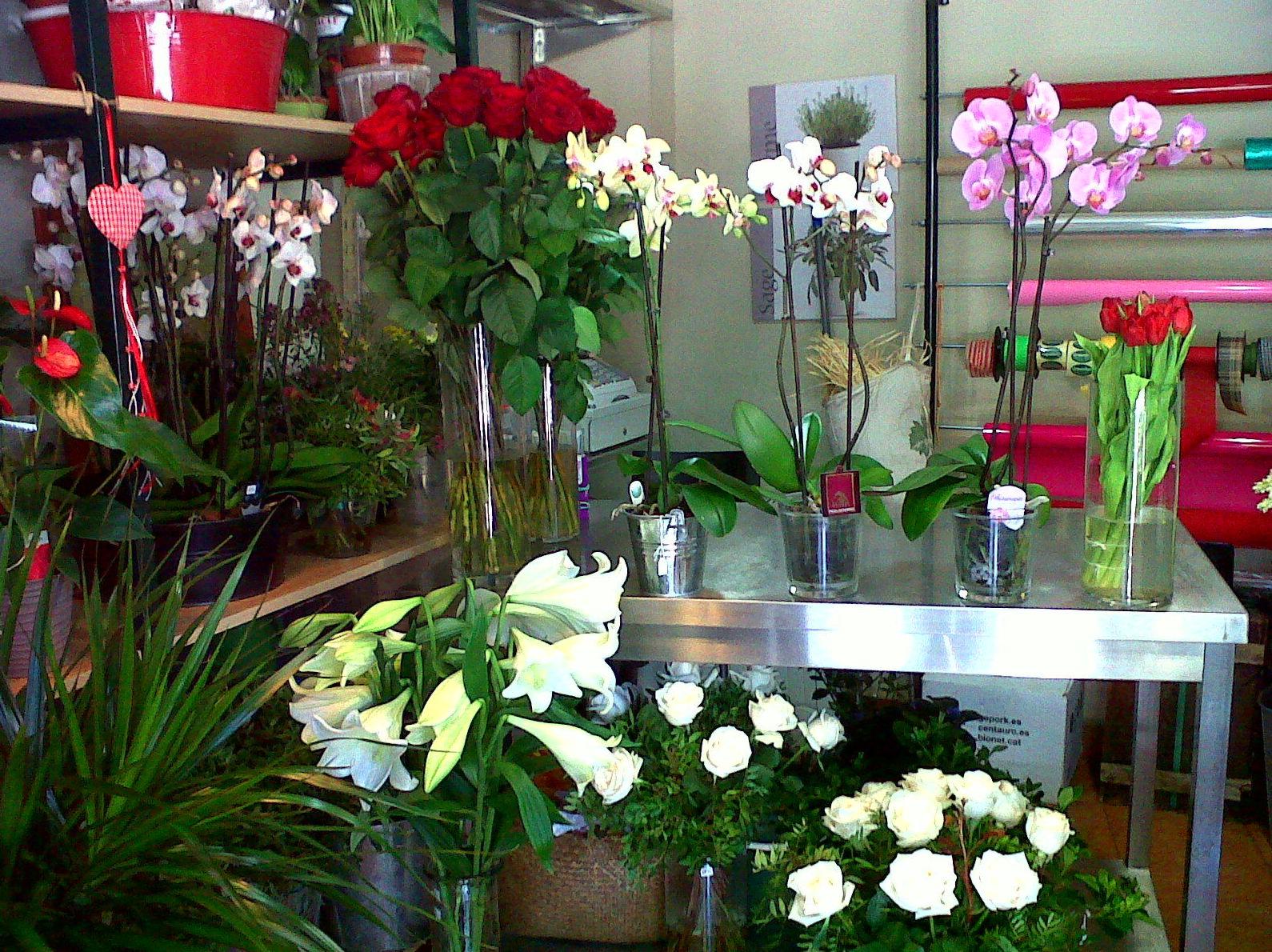 Greenflor nuestra tienda productos y servicios de for Jardineria a domicilio barcelona