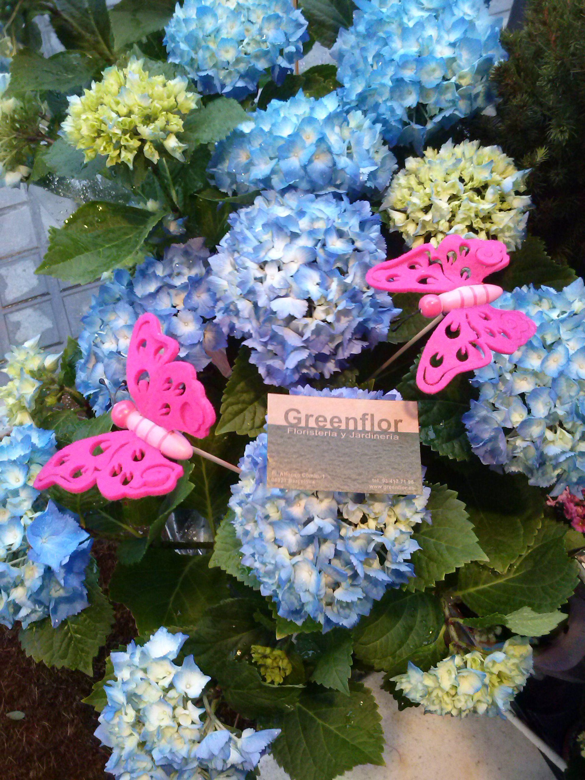 Hortensias productos y servicios de greenflor for Productos jardineria barcelona