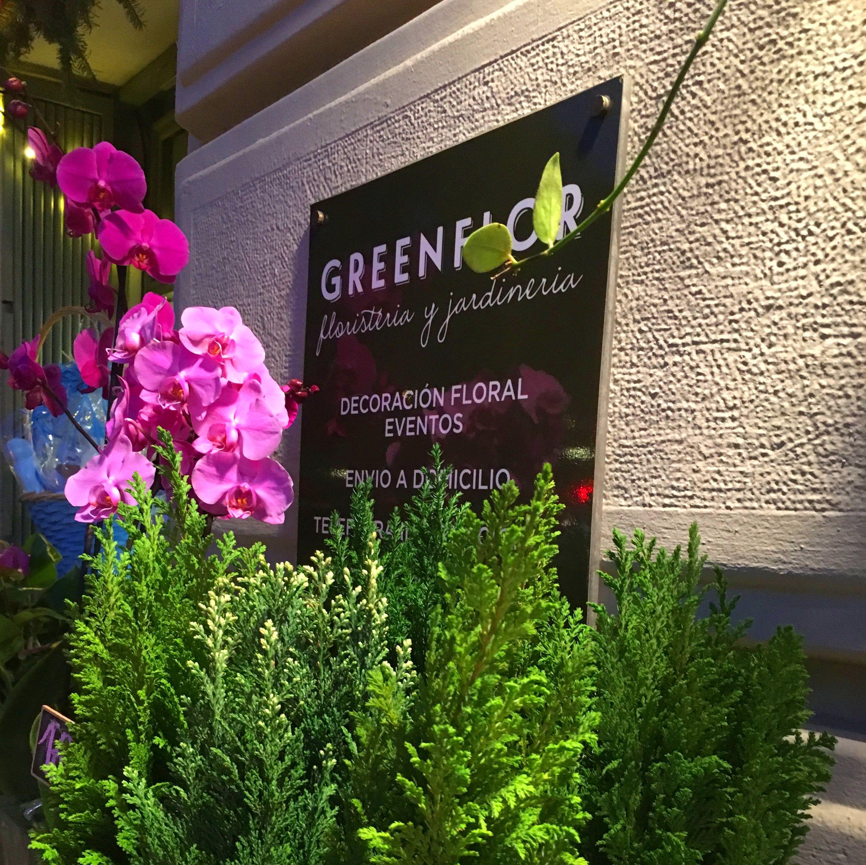 Winter flowers en greenflor for Jardineria a domicilio barcelona