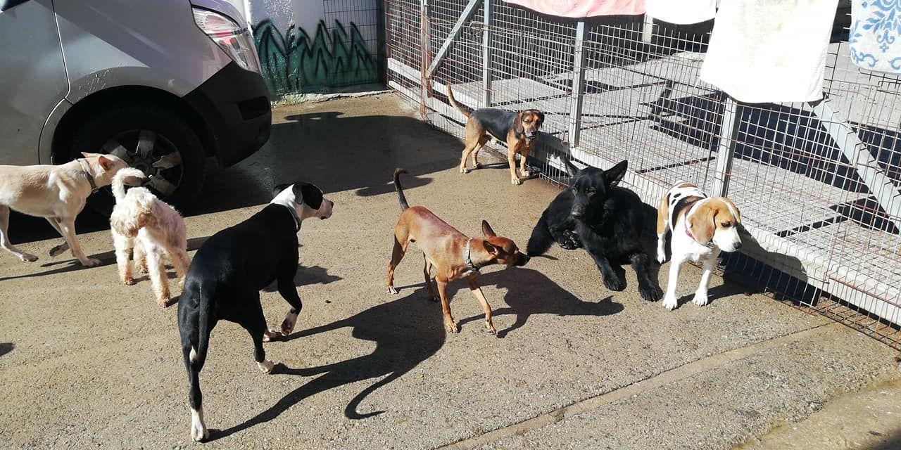 Residencia para perros en Valencia