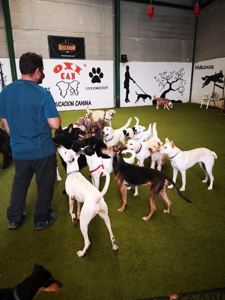 Tu guardería canina en Valencia
