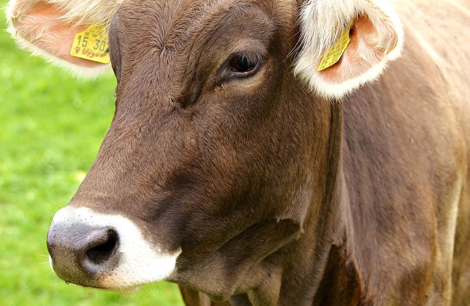 Carnes argentinas (Miscelania): Servicios de Casa Rural Can Jepet
