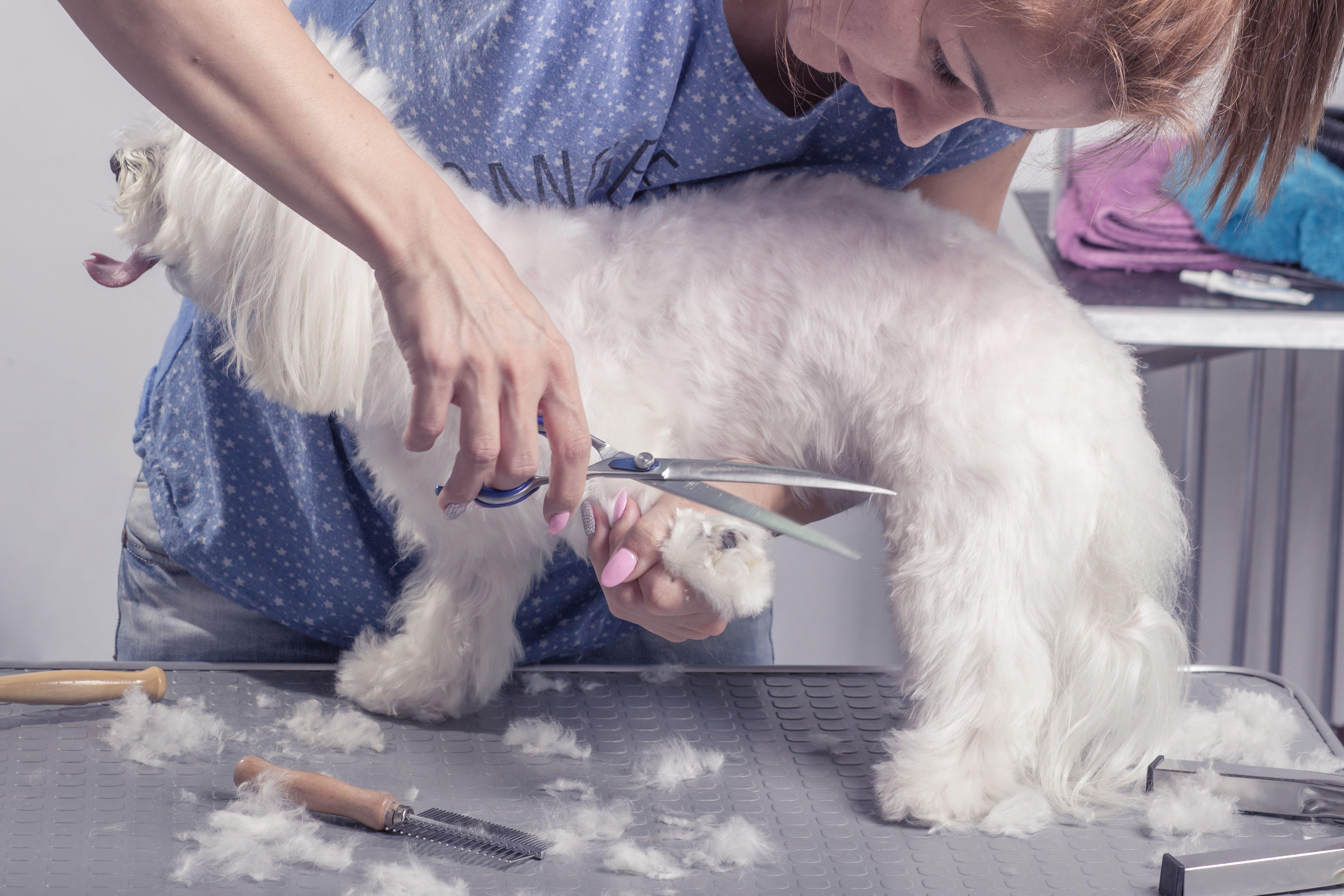 Peluquería canina y felina: Especialidades de Clínica Veterinaria San Marcos