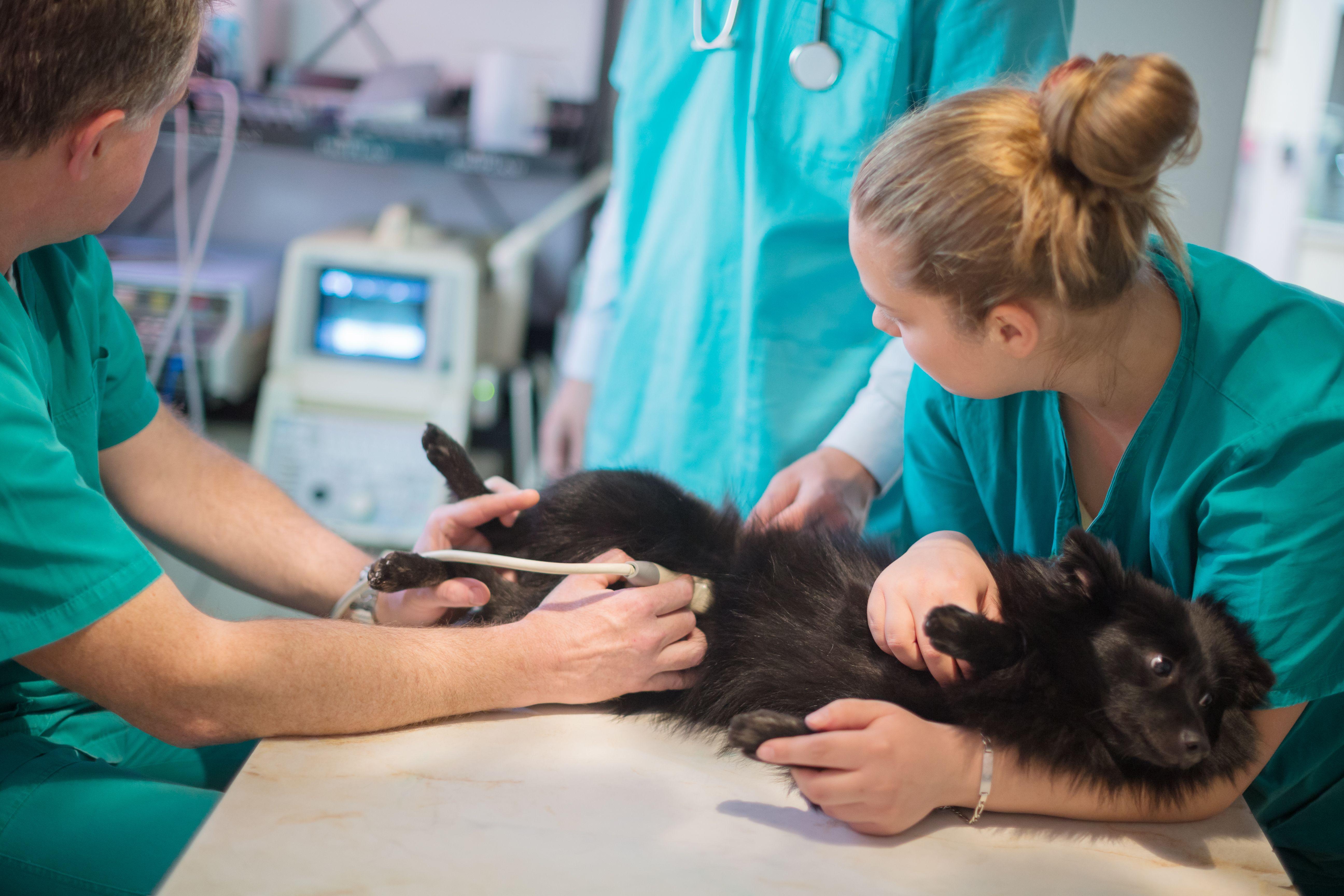 Cirugía: Especialidades de Clínica Veterinaria San Marcos