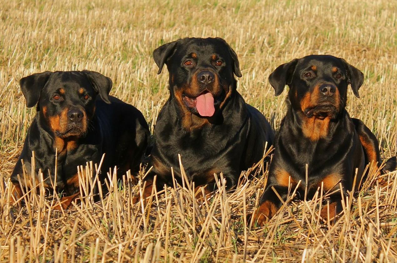 Certificado médico para la obtención de la licencia de tenencia de animales potencialmente peligrosos