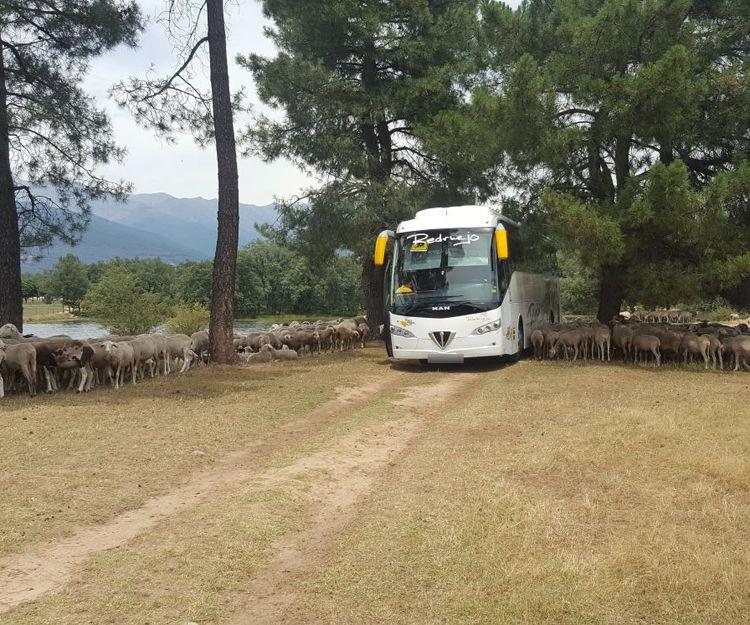 Nuestro autocar en plena naturaleza
