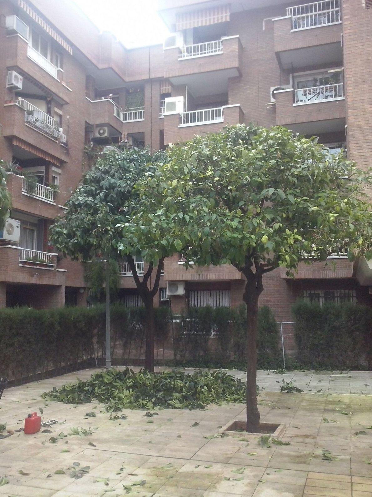 Poda de árboles y mantenimiento de jardines