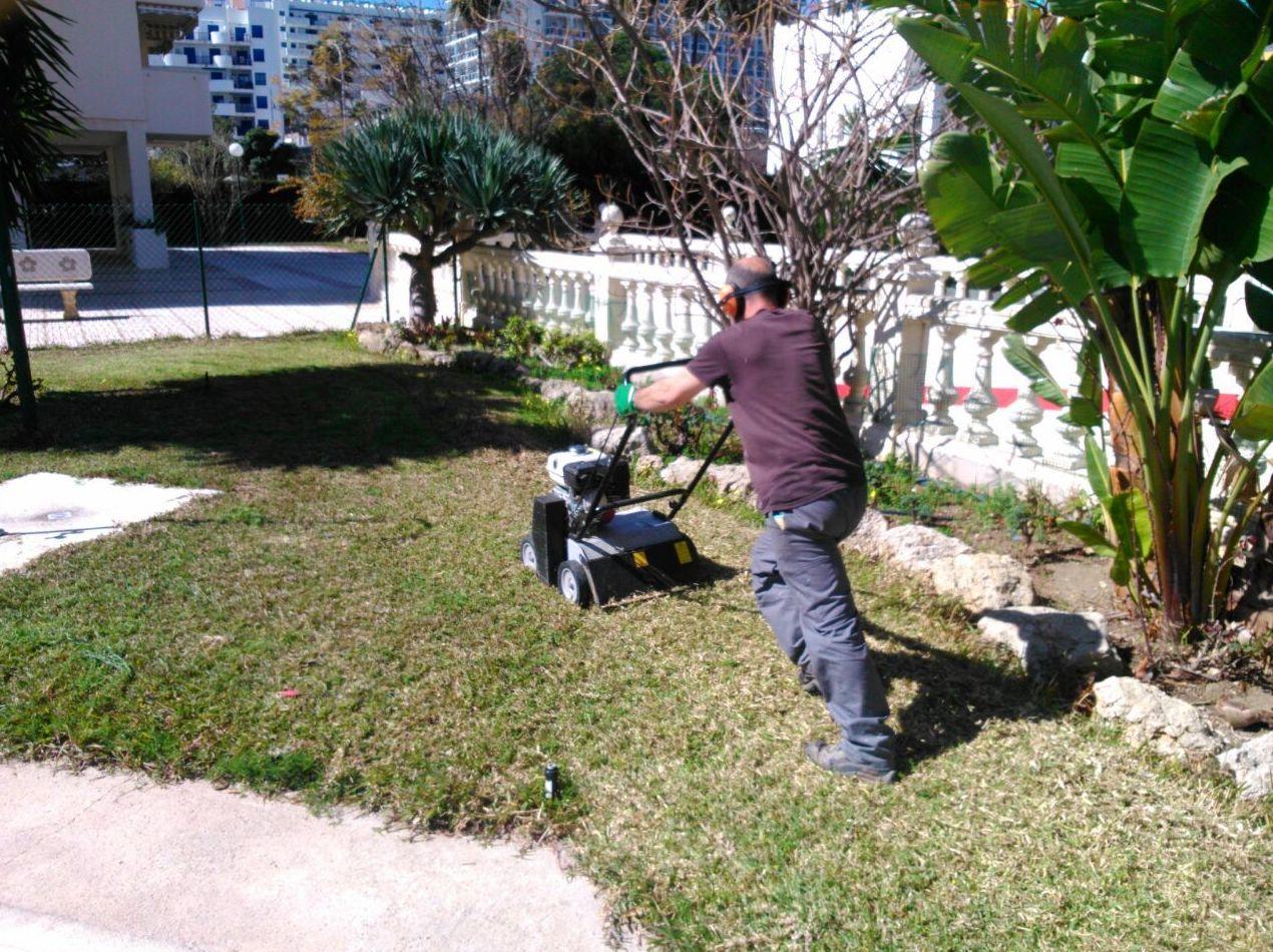 Servicios de jardinería para empresas y particulares