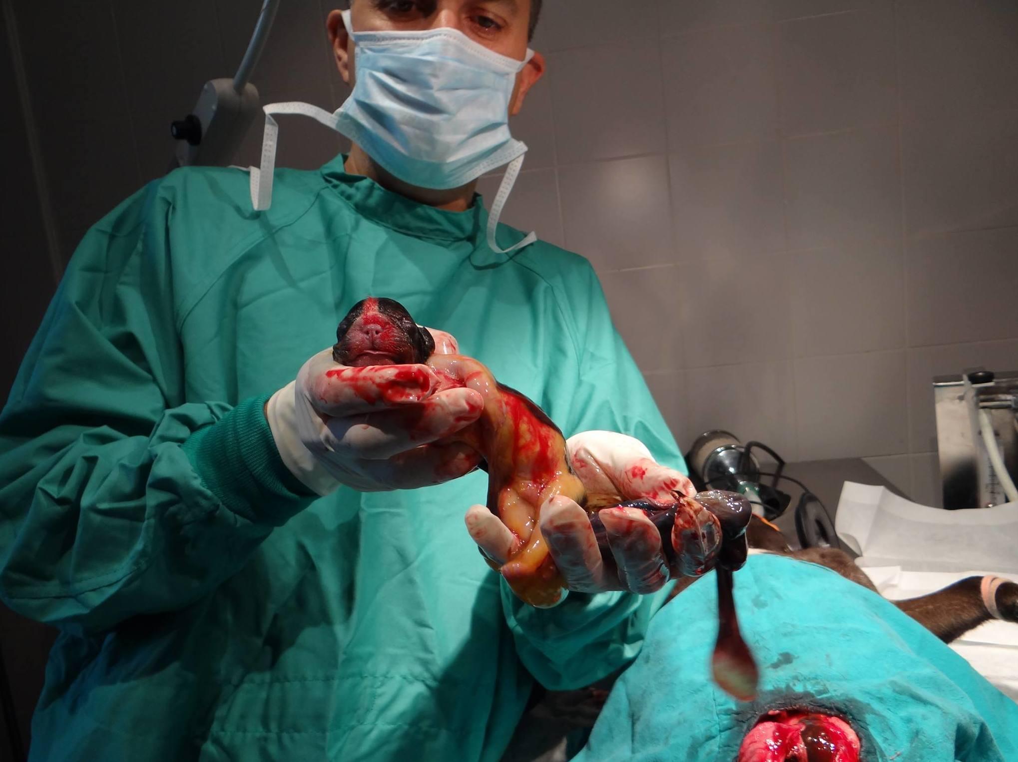 Hospital Veterinari Sant Antoni Abat en Mollet del Valles
