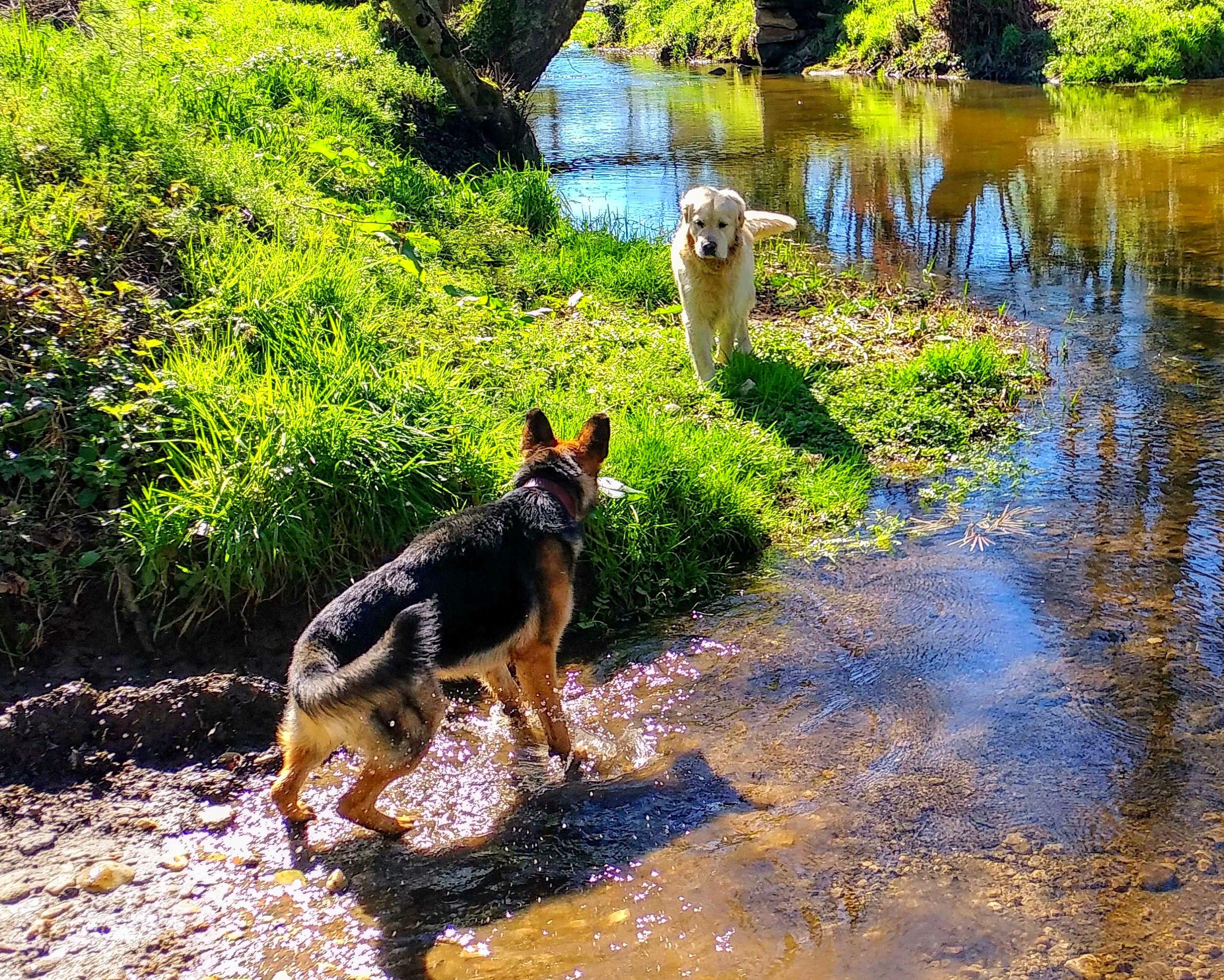 Preparación y atenciones, antes, durante y después del Camino con tu perro.