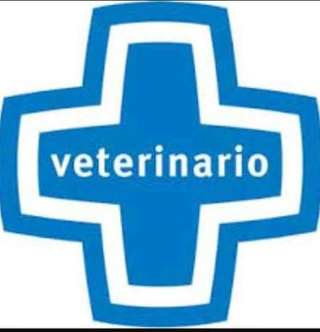 Requisitos veterinarios para hacer el Camino de Santiago con CaminoCan