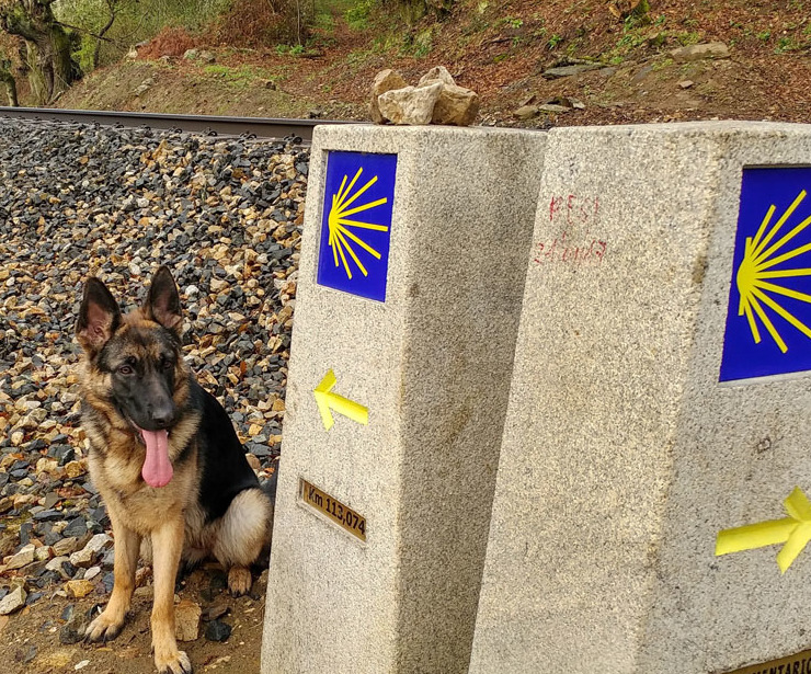 Camino de Santiago con perros